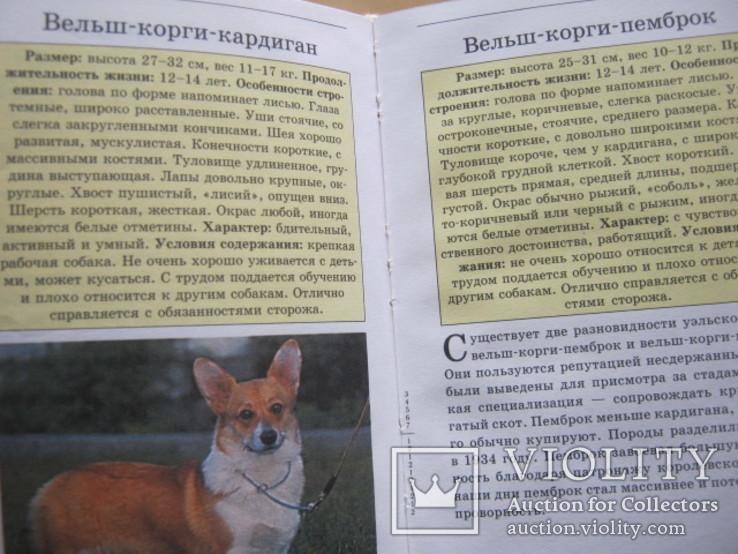 Мини-энциклопедия  Собаки, фото №10
