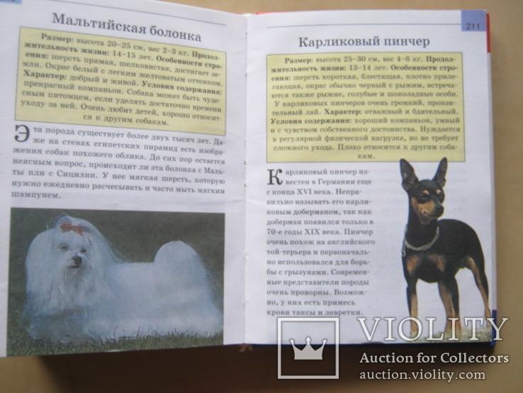 Мини-энциклопедия  Собаки, фото №12