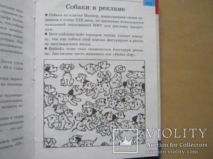 Мини-энциклопедия  Собаки, фото №13