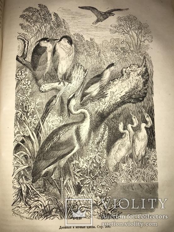 1875 Жизнь Птиц Книга с Шикарными гравюрами