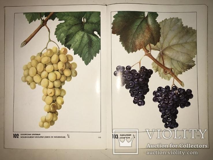 Лучший Виноград в СССР Каталог Красочный