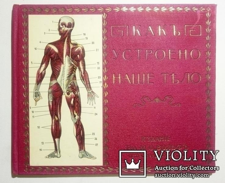 1912 Как устроено наше тело. Анатомия для всех