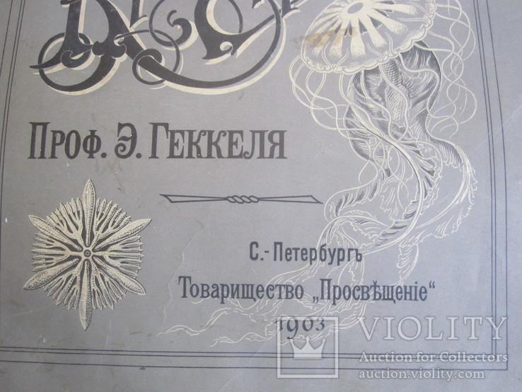 Э. Геккель Красота форм в природе ( обложка 28х37 см.  ), фото №4