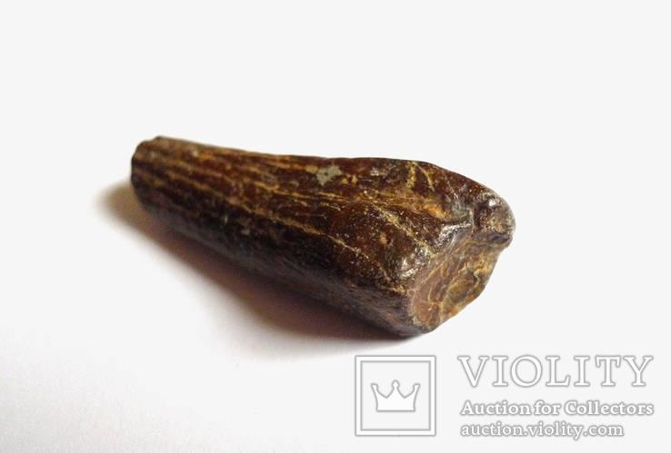 Фрагмент обкатоної гомілкової кістки тюленя монахопсіс неогенового періоду