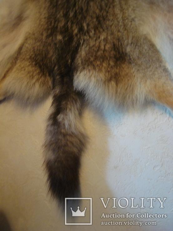 Волк, шкура с объёмной головой, фото №11
