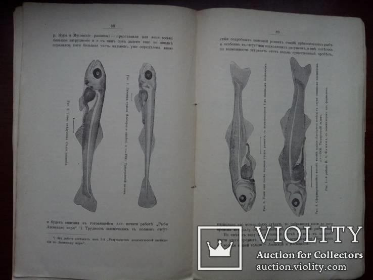 Никольский Рыборазводный завод. Рыбная Промышленность 1903г. С иллюстрациями, фото №7