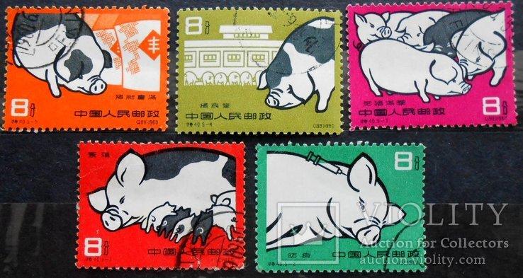 1960 г. Китай. Свиноводство. Гаш. Полная серия