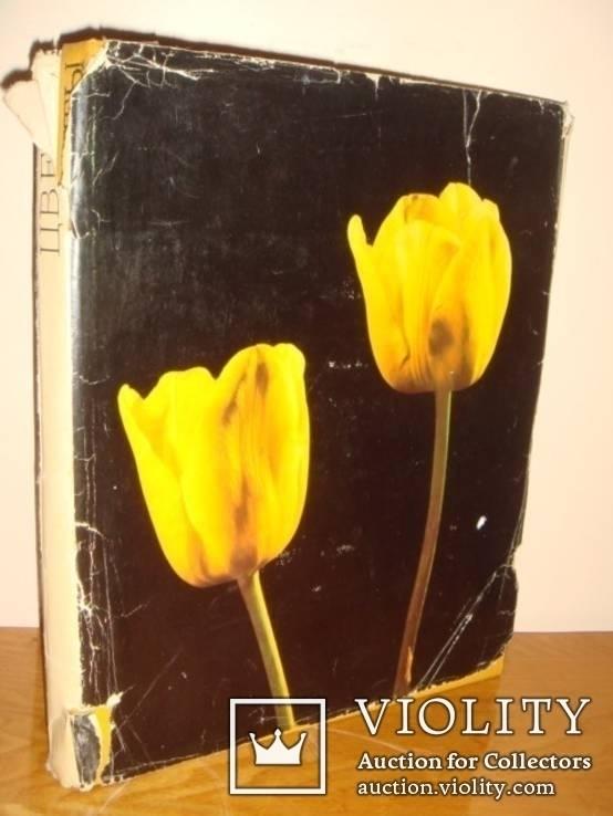 Цветы. Киев 1973 г 224 стр, фото №12