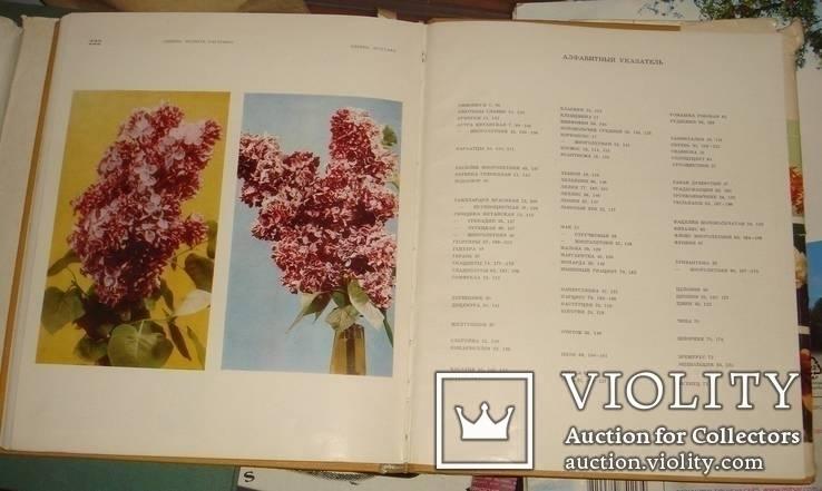Цветы. Киев 1973 г 224 стр, фото №13