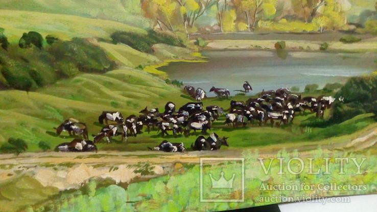 Выпас коров., фото №6