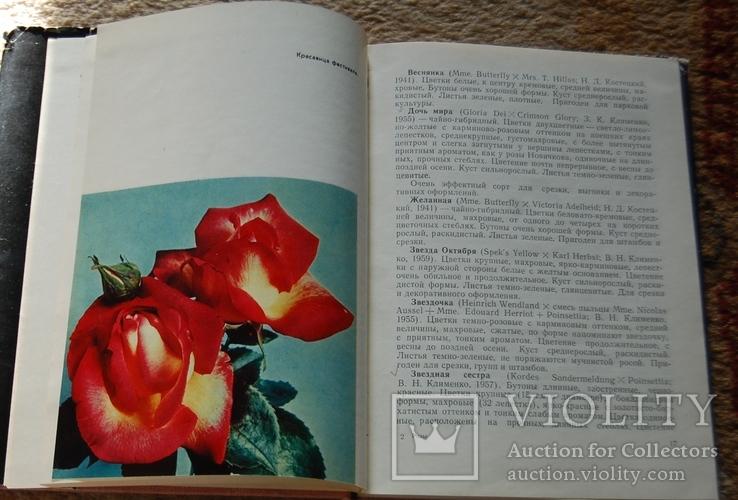 Розы, фото №5
