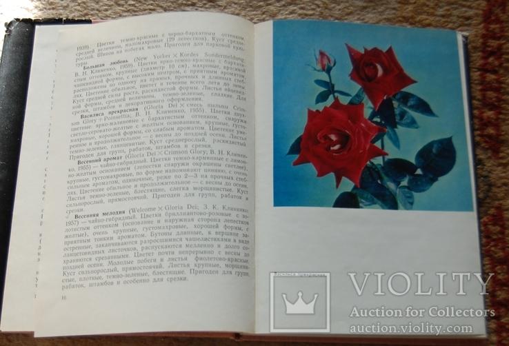 Розы, фото №6