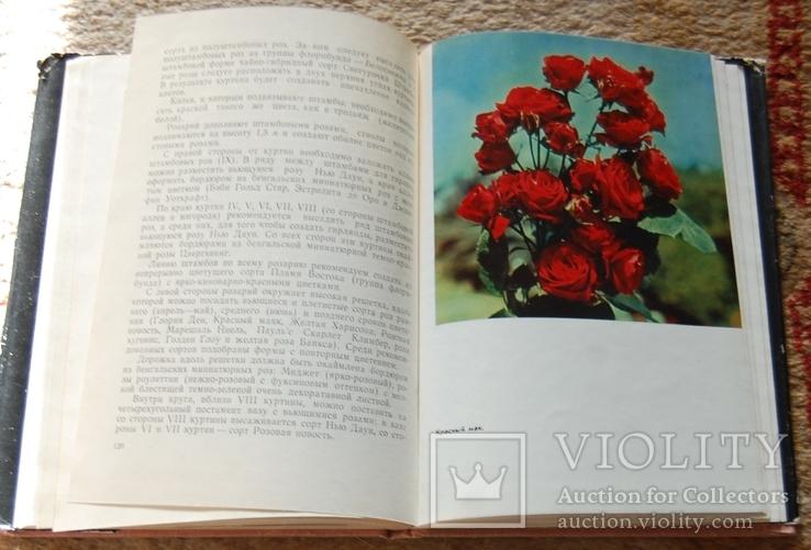 Розы, фото №9
