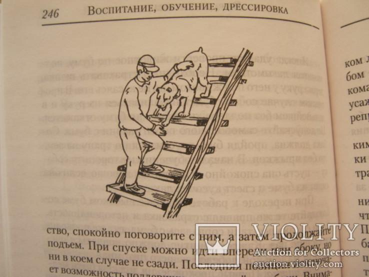 Ваша собака -телохранитель, фото №8