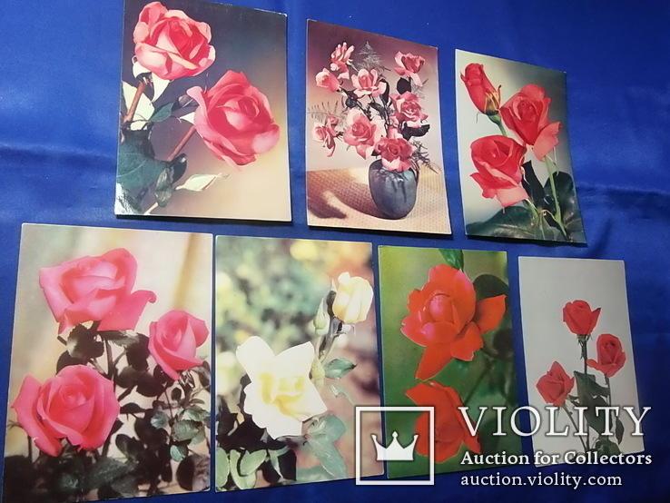 Открытки Розы Вьетнам Болгария Братислава Лейпциг 7 шт, фото №4