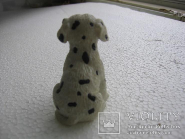 Собака 2, фото №5
