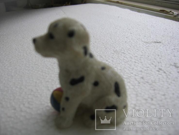 Собака 2, фото №6