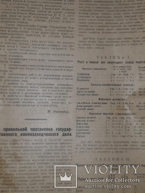 1921 Вестник коневодства, фото №3