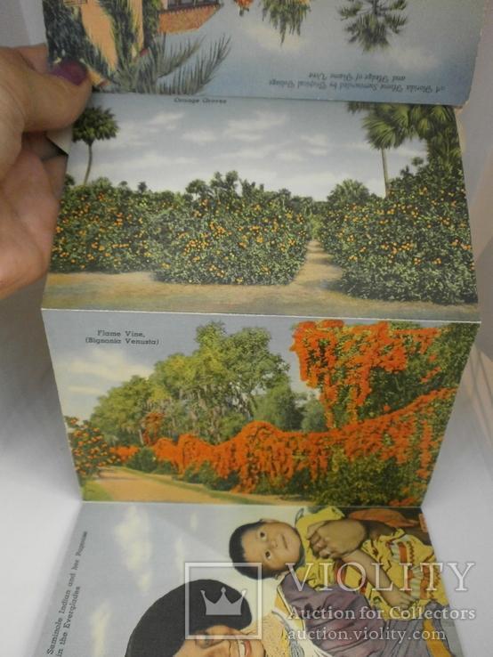 Набор с 18 видами США Флорида. Виды, природа, транспорт, фото №9