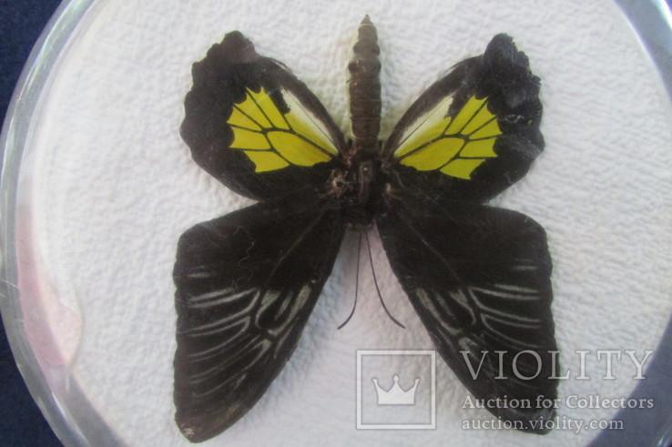 Бабочка в коробочке, фото №4