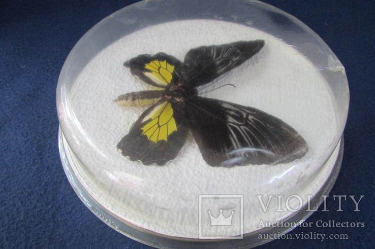 Бабочка в коробочке, фото №6