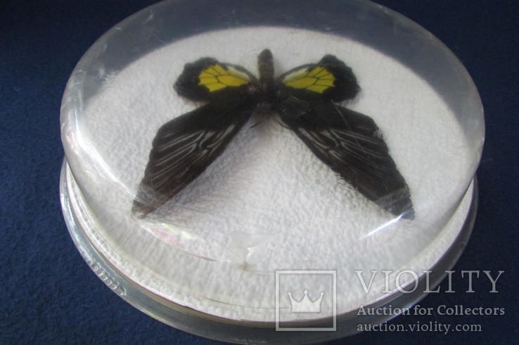 Бабочка в коробочке, фото №7