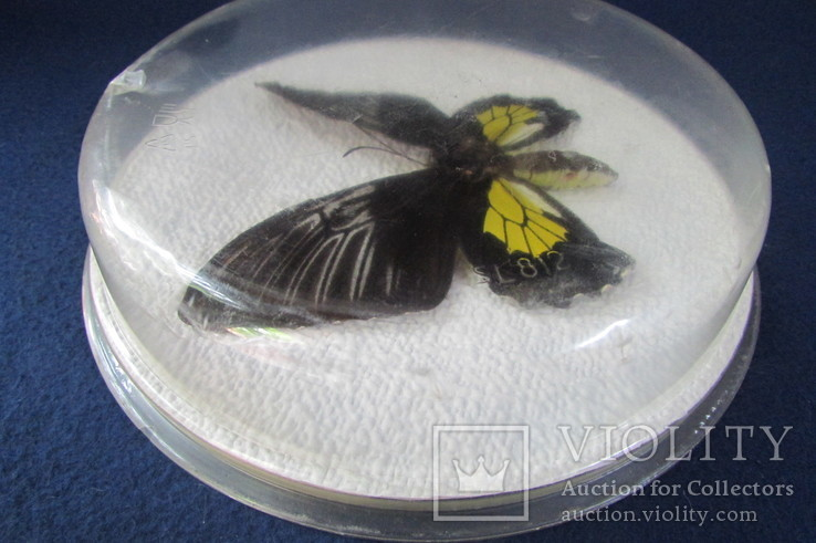 Бабочка в коробочке, фото №8