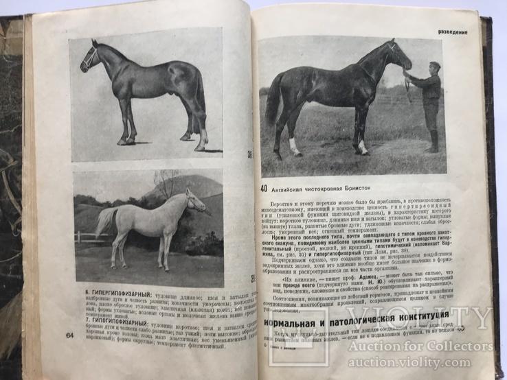 Книга о Лошади, 2 тома, изд.  1933 г. и 1937 г.