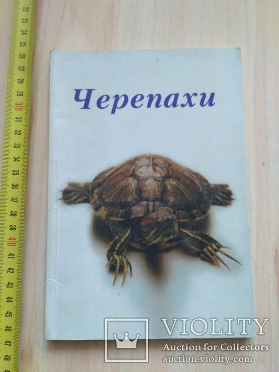 Черепахи 2000р., фото №2