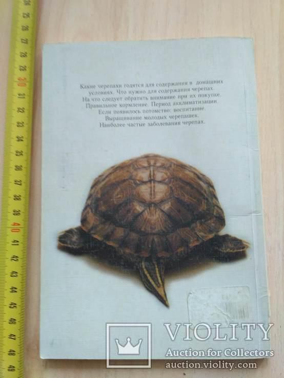 Черепахи 2000р., фото №3