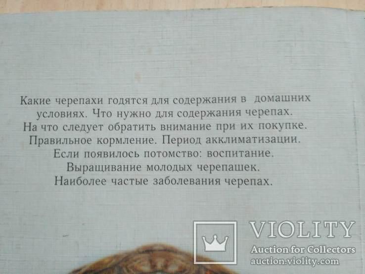 Черепахи 2000р., фото №4