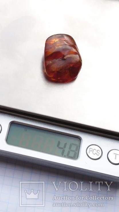 Янтарь инклюз 4,8 грамм.Паук., фото №13