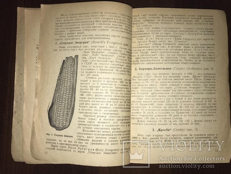 1932 Консервирование Сахарной кукурудзы, фото №5