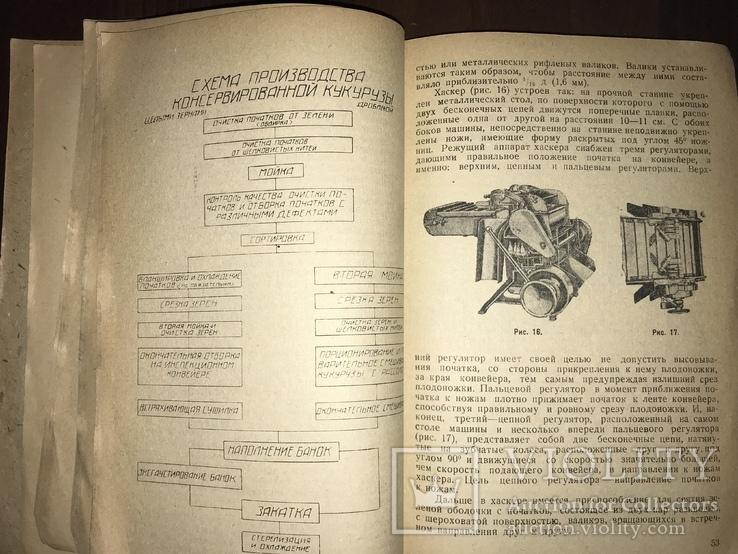 1932 Консервирование Сахарной кукурудзы, фото №9