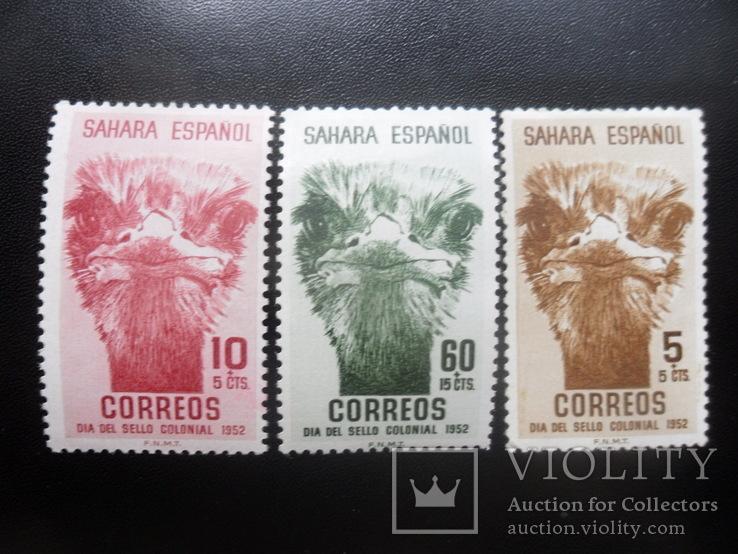 Фауна. Птицы. Испанская Сахара. 1952 г.  МН