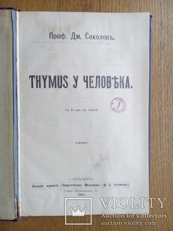 Тимус у человека 1910г. Опыты и эксперименты., фото №4