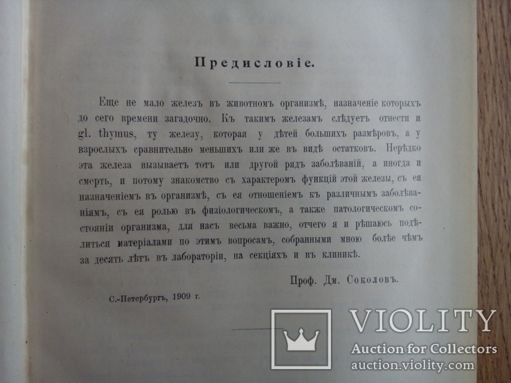 Тимус у человека 1910г. Опыты и эксперименты., фото №5