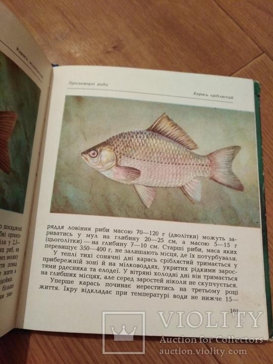 Риби наших водойм., фото №5
