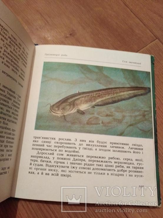 Риби наших водойм., фото №6