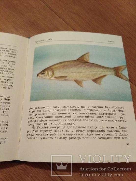Риби наших водойм., фото №8