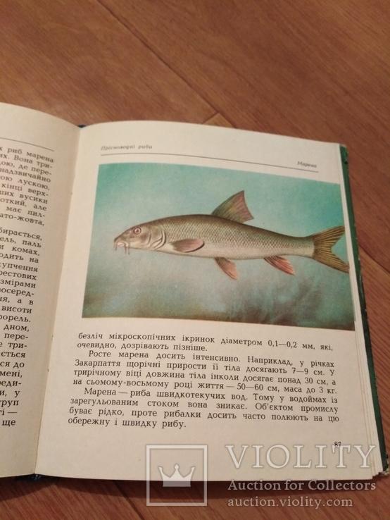 Риби наших водойм., фото №9