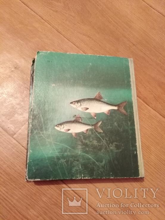 Риби наших водойм., фото №11