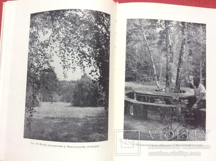 Лісопарки України з ілюстраціями 1968р, фото №5
