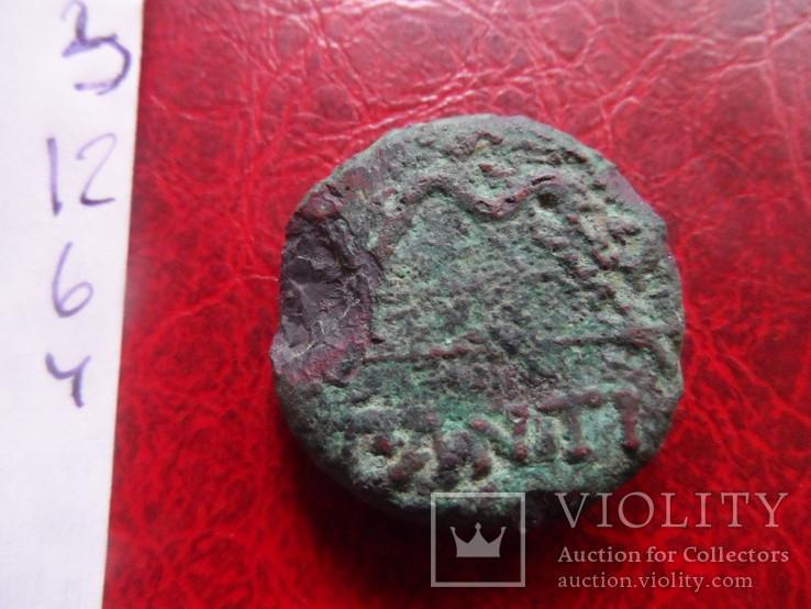 Пантикапей крупный  (,12.6.4)~, фото №6