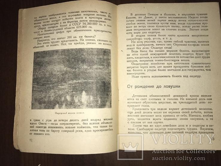 1932 Мех из болота Ондатра, фото №5