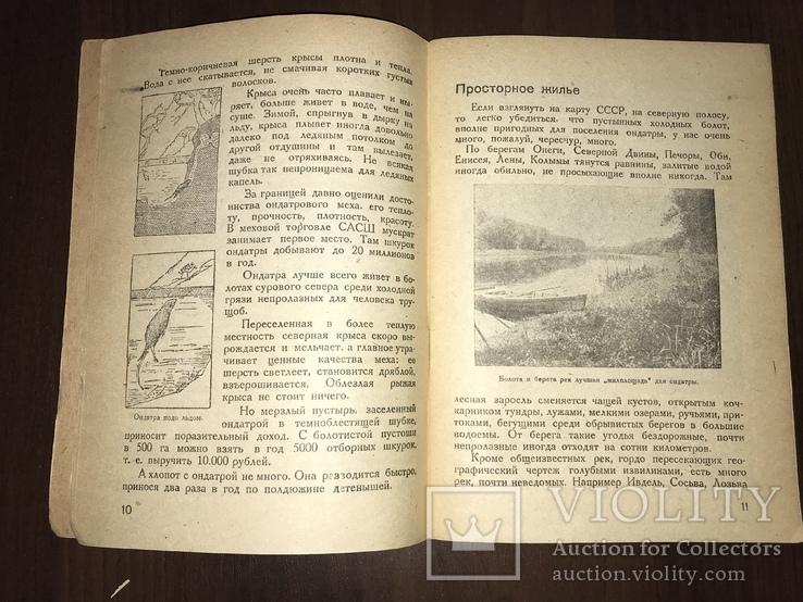 1932 Мех из болота Ондатра, фото №6