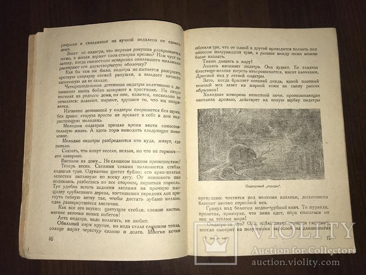 1932 Мех из болота Ондатра, фото №8
