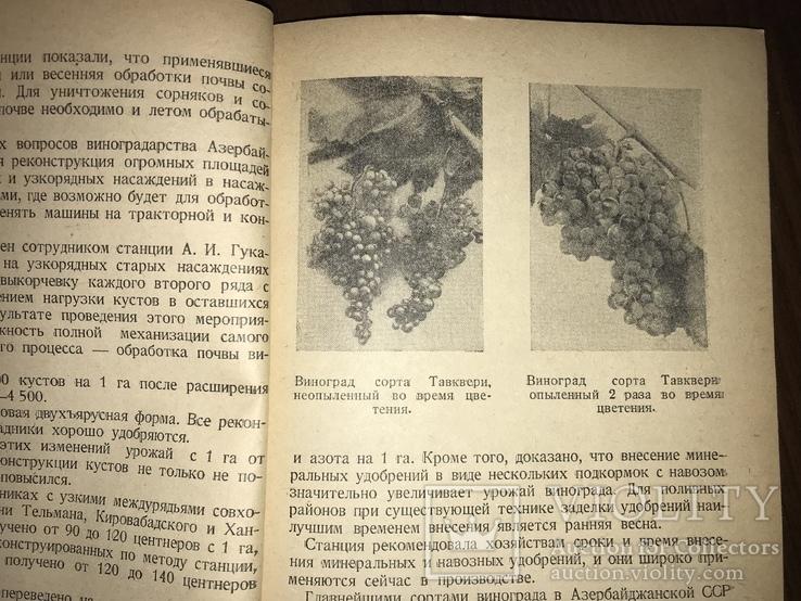 1940 За высокие урожаи Винограда, фото №5