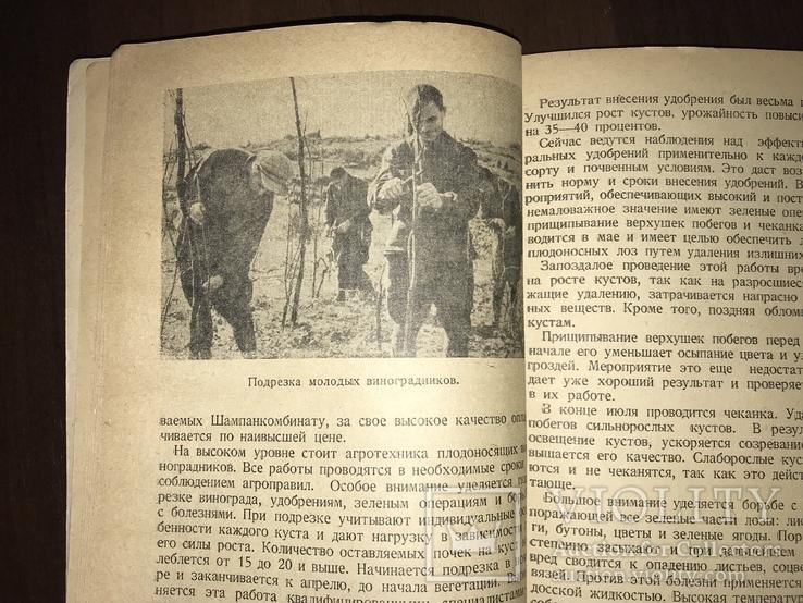 1940 За высокие урожаи Винограда, фото №6
