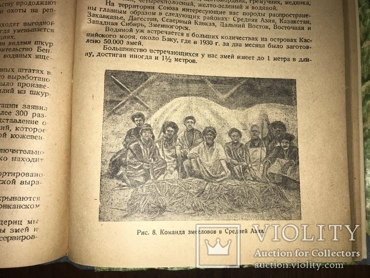 1932 Добыча Змей  Рогов оленей Кости Мамонта Морских зверей, фото №4